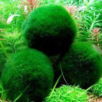 wasser cladophora aquarien dekor lebende pflanzen grüne ball marimo moss ball