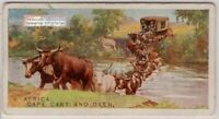 South African Cape  Ox Drawn Cart Wagon 1920s Trade Ad Card
