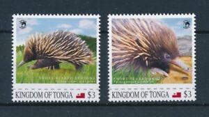 [107917] Tonga  Wild life Short-beaked Echidna hedgehog anteater  MNH