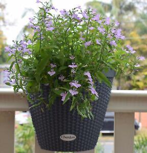 Balcony railing planter - Cherdon / Pynfels