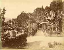 Italia, Tremezzo, Vue sur le jardin de la Villa Carlotta   Vintage albumen print