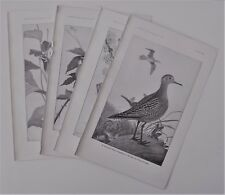FOUR Bird Prints of Agriculture Importance Plover, Nuthatch, Sparrow, & Warbler