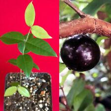Фрукты и фруктовые деревья