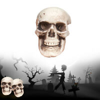 Human Skull Decoration Prop Skeleton Plastic Head Halloween CoffeeBar Ornament