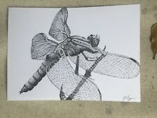Original Dragonfly Pen Drawing