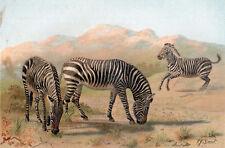 Zebra 1894 Mammal - Pierre Jacques Smit Victorian Chromolithograph