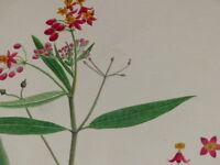 """[BOTANIQUE] DESSIN ORIGINAL COULEURS AQUARELLE """"ASCLEPIADE"""" Floral water-color"""