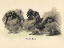 PEKINGESE CHARMING DOG GREETINGS NOTE CARD TWO BEAUTIFUL DOGS