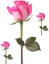 Set 3x autocollant sticker voiture moto fleur rose tige epine deco enfant