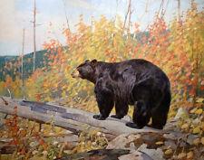 Rungius Carl American Black Bear Print 11 x 14    #4867