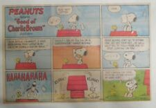 (51) Peanuts Sunday Pages by Charles Schulz from 1982 Size: ~11 x 14 inches