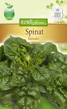 Espinacas 'Matador' - Spinacia Oleracea,otoño & Primavera Paquete Grande