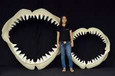 GREAT WHITE SHARK TEETH