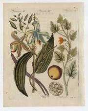 Gewürze-Vanille-Koloquinte-Vanilla -Bertuch-Kupferstich 1810 Pflanzen-Coloquinte
