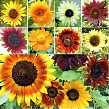 1,000+ Sunflower Seeds for Planting - Jumbo Mix Pack - 15+ Varieties big packs