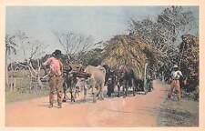 Cuba, Driver With Loaded Ox Cart, Norddeutscher Lloyd Pub, c. 1910-20's