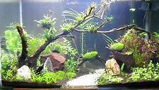500ml+500ml Macro and Micro Nutrients for planted aquarium plants