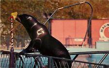 1950s Sea Lion- Marineland Of The Pacific, Palos Verdes California Postcard