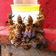 20*Bees Drinking fountains Nest door feeders Beehive Nest box Septum  Beekeeping