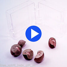 5 LIVE Magic Mexican Jumping Beans ** WATCH VIDEO NOW!  ** The Real Deal