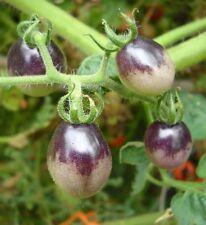 Purple Cherry Tomato 100 seeds * Non GMO * ez grow * Sweet * I12