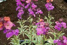 Cold Light H5 (-15 to -10 °C) Plants, Seeds & Bulbs