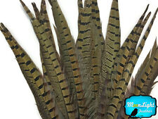 "10 pieces - 14-16"" NATURAL LONG Ringneck Pheasant Tail Feathers"
