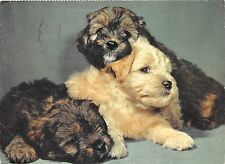 B36761 Animals Animaux Chien Dog germany