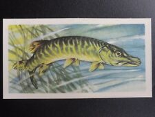 No.34 PIKE - Freshwater Fish by Brooke Bond & Co. 1960