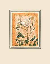 Pierre-Joseph Redoute rosenburgs ROSE poster stampa d'arte immagine 50x40cm