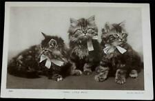 "OLD POSTCARD OF CATS / KITTENS - ""THREE LITTLE PETS"""