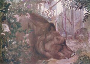 Vintage DETMOLD Wildlife Art Print BALOO Sloth Bear JUNGLE BOOK Kipling