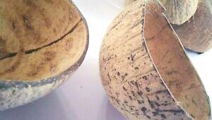 Organic Natural Coconut Shell Bowl Original Coconut Shell Eco Friendly 2 Bowls
