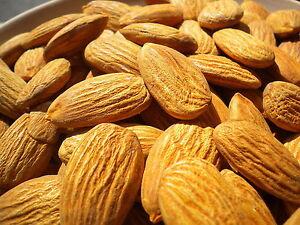 Extract Aromatic Almond 10 ML