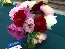 20 seeds of peony flowers mix of colors peonia pivoine red white yellow rose