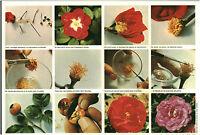 Document vintage issu de magazine  année 70/80 triptyque fleurs