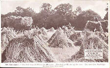 Slough. Wheat Crop Grown by R. Lee & Hadfields Corn Manure.