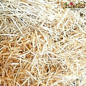 Wood Wool Excelsior - For Fruit Fly Cultures Flies Breeding Media Insect Culture