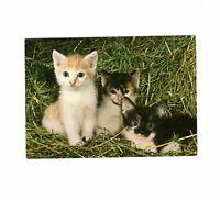 AK Ansichtskarte Niedliche Katzenbabys / Kitten - 1999