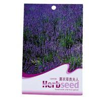 20pcs / sac Graines de lavande violet Graines des Fleurs fraiches G4Y2