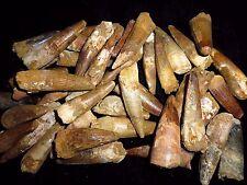 Spinosaurus Zahn aus Kem Kem, Marokko Spinosaurier Dinosaurier fossilien