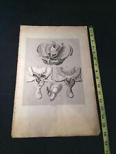 RARE 1823 10X16 Medical Engraving LAID PAPER Antonio Scarpa HERNIA Male Parts