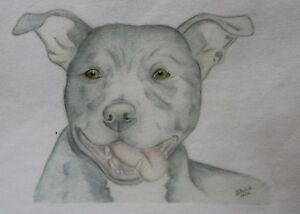 Staffie Staffordshire Bull Terrier T-Shirt or Sweatshirt 5 Designs 3-6mths - XXL