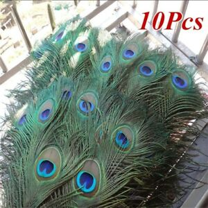 10Pcs 100% Real Natural Peacock Tail Eyes Feathers Wedding Party Decor 25-30cm