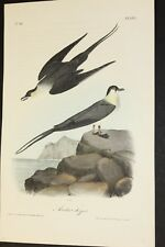 AUDUBON'S BIRDS of AMERICA  -  ARTIC JAGER   -  First Edition Octavo Plate 453