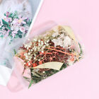 Real Dried Flower Dry Plants For Candle Resin Pendant Jewelry Making Craft  Jg