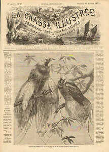 Birds Of Paradise, Vintage 1873 French Antique Art Print