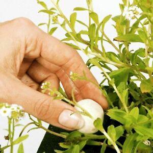 185G GROWTH BALLS POND PLANT FERTILISER WATER LILIES GARDEN PLANTATION FOOD