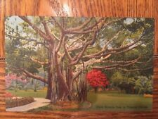 Postcard Unused Linen Florida-Giant Banyan Tree In Tropical Florida