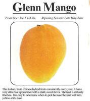Glenn Grafted Mango Tree 3 Gal Potted Tree